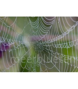 "Spinnweben ""Netzwerke"""