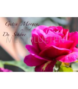 Ein RosenMorgen