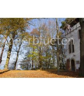 """Müggelsee """"Prinzengarten Herbst"""